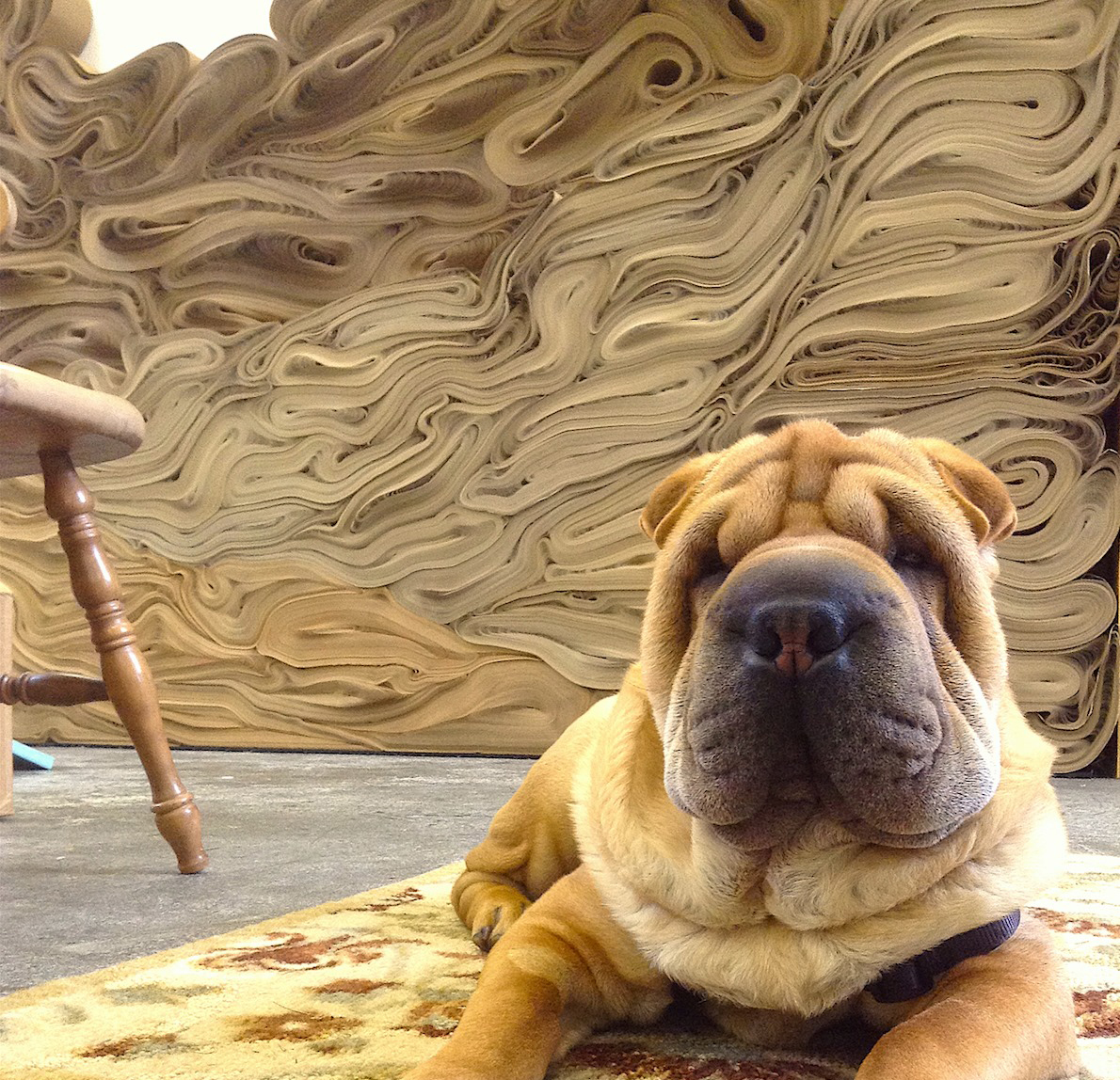 Photograph of a dog laying in front of an artwork made of rolls of paper