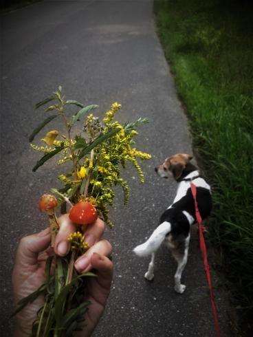 Photo of someone's hand holding flowers with a dog in the background